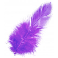 Feathers - Violet